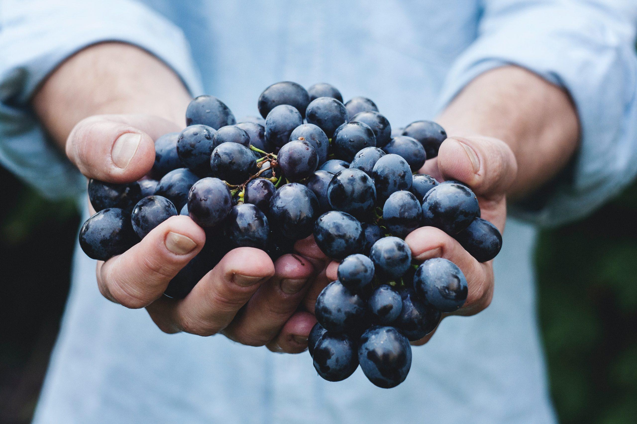cégér pályázat szőlő